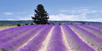 Provence for Families